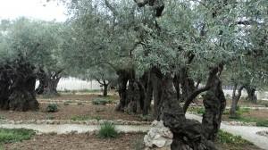 сад Гетсиманський